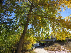 Along the Arkansas River (Patricia Henschen) Tags: arkansasriver canoncitycolorado riverwalk usroute50