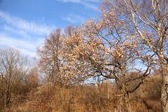 Krylatskoe park (andrewwizard7) Tags: life trip travel blue autumn cloud sun nature wind russia moscow air calm adventure journey