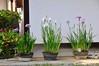 _DSC0994 (the.bryce) Tags: japan hiroshima shukkeiengarden