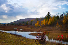 indian summer (laura's Point of View) Tags: autumn trees color fall nature beauty forest river stream michigan upperpeninsula larch indiansummer munising puremichigan lauraspointofview lauraspov