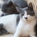 Grey cats // Trip to Jordan