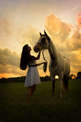 IMG_50171 (megscapturedtreasures) Tags: horse victoria