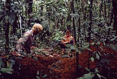 Digging profile H (KarstenThomsen1) Tags: ecuador rainforest profile soil napo sampling yasun