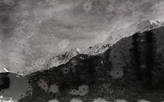 Perutz Perpantic 17 (Max Miedinger) Tags: blackandwhite bw black film blackwhite nikon f100 150 fungus unknown 17 epson sw date expired biancoenero selfdeveloped pellicola perutz v700 rullino fossilised r09 perpantic