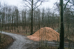 State of matter (Raphs) Tags: wood trees winter forest denmark grey track forestry bare overcast trunks danmark canoneos350d beech woodchips raphs sjlland bisserup tamronspaf1750mmf28xrdiiildaspherical