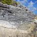 Calcarenitic eolianite (Hanna Bay Member, Rice Bay Formation, Holocene; Graham's Harbour, San Salvador Island, Bahamas) 11
