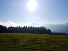 Gegenlicht bei Thann / Backlight nearby Thann (rudi_valtiner) Tags: sun mist fog forest austria sterreich nebel meadow wiese hills sonne wald niedersterreich autriche thann hgel warth loweraustria buckligewelt