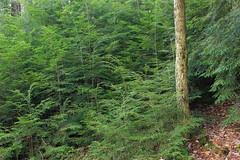 Fern Rock Nature Trail (20)