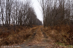 Abandoned ROW east of Lattimer (jwjordak) Tags: railroad usa fall abandoned train row oh erie lattimer secondsub