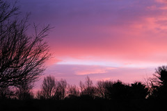 17/365: In the pink (judi may) Tags: pink trees sky silhouette clouds sunrise day17 hertfordshire ickleford canon7d day17365 365the2015edition 3652015 17jan15