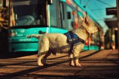 Nando... (hobbit68) Tags: old sunset canon tiere outdoor frankfurt sommer haus hund sonne gebude gleise hunde tier sonnenschein gleisen