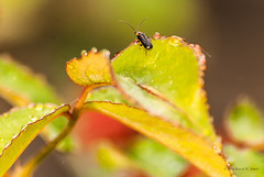 Wet Bug (Back Road Photography (Kevin W. Jerrell)) Tags: macro nature droplets insects bugs waterdrops closeups nikond60 thingsthatfly macrolife thingsthatcrawl frontporchphotography