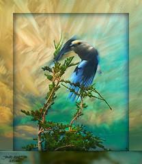 Freedom (jawadn_99) Tags: blue black tree green bird art texture birds yellow fauna photography fly artistic explore interrestingness coth5