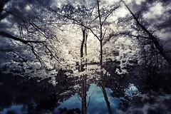 lost in a forest (kenjiedwards) Tags: trees forest pond maryland infrared vignette falsecolor hss irconversion sliderssunday
