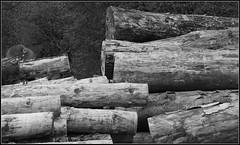 Schwarzwaldgold (horidole) Tags: wood deutschland madera holz schwarzwald blackforest bois legno badenwrttemberg fortnoire berndsontheimer