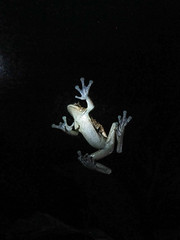 "Santa Elena: les étangs à grenouilles by night <a style=""margin-left:10px; font-size:0.8em;"" href=""http://www.flickr.com/photos/127723101@N04/26963003486/"" target=""_blank"">@flickr</a>"