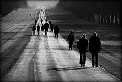 return of the living dead (bostankorkulugu) Tags: road park uk greatbritain trees england people blackandwhite bw monochrome silhouette sepia blackwhite unitedkingdom walk meadow royal windsor berkshire bostanci windsorcastle maidenhead exodus bostan longwalk korkut bostankorkulugu