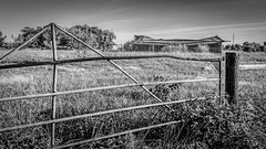 Old Barn and Fence (Mike Schaffner) Tags: ranch old trees blackandwhite bw abandoned monochrome field barn fence us blackwhite weeds gate texas unitedstates farm derelict hff sealy