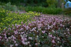 Speaking Garden. Jardins que falam. Campos do Jordo - So Paulo - Brasil. (valmirmacario) Tags: plant flower garden sopaulo jardim camposdojordo