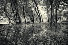 Landscape-7D2 (Dahai Z) Tags: morning monochrome landscape blackwhite testshot desplainesriver canonefs1022 potawatomiwoods canoneosdmarkii