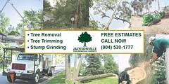 Tips for Planting Trees in Jacksonville, Florida https://t.co/gdrTrrDcKd https://t.co/vYqfzVXVdv (treeservicejax) Tags: tree service jacksonville trimming removal treeservicejacksonville
