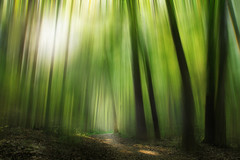 Mystic forest (Dejan Hudoletnjak) Tags: light abstract motion green nature forest artistic path mystic mysticforest