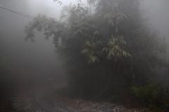 Sa Pa 11 (gsamie) Tags: winter mist color rain fog canon vietnam sapa hmong bamboos t3i 600d gsamie guillaumesamie