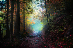 Into Another World (Andrea Effulge) Tags: november autumn trees light mist fall nature colors misty forest october colorful solitude spirit path dream foggy surreal atmosphere tunnel dreaming journey soul dreamy dimension magical wandering atmospheric forestpath dreamscape dimensions sorcery sweven magicalforest andreaeffulge
