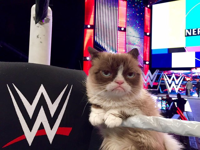 Thumbnail for Grumpy Cat on 11/17 WWE Raw