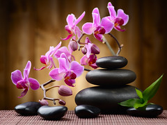 spa concept (tigercop2k3) Tags: life pink plant black orchid flower green leaves rock stone closeup composition relax asian fire wooden leaf still candle grove blossom stones background row boulder bamboo stack mat pebble flame zen massage tropical medicine balance candlelight meditation concept therapy care relaxation spa candlestick alternative sapa aroma wellness handful treatment aromatherapy wellbeing russianfederation