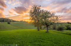 Beautiful evening in October 2 (andreasheinrich) Tags: sunset tree germany deutschland evening abend nikon sonnenuntergang felder fields baum hdr 32bit southgermany d7000