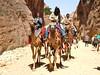 Cammelli a Petra (costagar51) Tags: petra natura jordan animali giordania anticando panoramafotográfico greatshotss contactgroups peopleenjoyingnature photothebestofmimamorsgroups