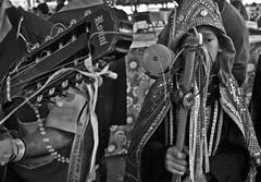 Feira de São Joaquim | Salvador (munizphotos) Tags: brazil saopaulo aparecida negros candomble catolicismo nossasenhoradorosario folclore saobenedito congadas umbanda reisado foliadereis sincretismoreligioso festareligiosa moçambiques profanoesagrado spfw2012 dancascristas marcosmunizdasilva