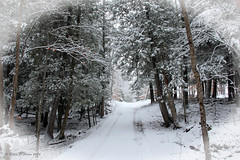 Out For A Walk (Robert F. Carter) Tags: snow countryroads michigan northernmichigan indianriver alanson walking crookedtreeartscenter crookedtreephotographicsociety petoskeyphotographyclub petoskeycameraclub robertcarterphotographycom ©robertcarter puremichigan
