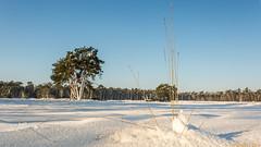 Winter in het nationaal Park De Loonse en Drunense Duinen(2) (Wim Boon Fotografie) Tags: winter canon1740f4l polarisatiefilter wimzilver wimboon canoneosmark5diii