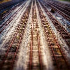 Vanishing point. #buffalo #train #railroad #tracks (Michael William Thomas) Tags: wedding ny newyork mike square photography michael buffalo photographer thomas squareformat sutro mikethomas mtphoto iphoneography instagramapp uploaded:by=instagram michaelwilliamthomas