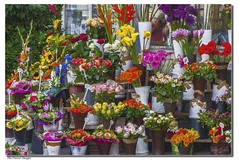 The Flower Shoppe (Sugardxn) Tags: cruise flower colors photoshop river painting florist viking select bouquets vikingrivercruise sugardxn garypentin