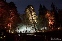 Enchanted Forest (DMeadows) Tags: wood trees light colour tree water silhouette night forest woodland reflections landscape lights scotland colours bright forestry low perthshire event reflect perth lit loch commission pitlochry 2014 faskally davidmeadows dmeadows