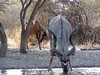 Botswana Hunting Safari 61