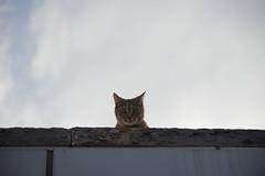 TSA Cat (slightheadache) Tags: nyc newyorkcity newyork brooklyn cat homelandsecurity tsa creep 2014 seesomethingsaysomething securitytheater