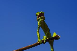Chameleon style