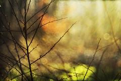 the last rays of sun (irina_escoffery) Tags:
