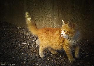 Un amour de chat !
