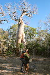 Twisting like the lover's baobab at Camp Amoureux - Madagascar July 2014
