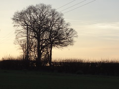 Last walk of the year (ART NAHPRO) Tags: new sunset cold rural happy sussex evening countryside frost afternoon year frosty lane newyearseve weald etchingham fontridge
