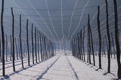 Im steirischen Hopfenland (eulenbilder) Tags: schnee winter eis landschaft steiermark hopfen 2015 südsteiermark eulenbilder