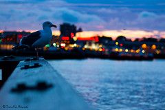 The Warf (trinstanprep) Tags: california sunset lake bird sports america canon butterfly photography bay high san francisco raw zoom bokeh wildlife seagull awesome birding parks insects sharp clear telephoto area shutter resolution manual adventures tamron lenses autofocus cmos 70d 150600mm