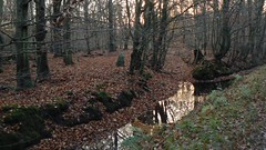 Zingster Osterwald (uempe (only sporadically here)) Tags: november tree nature water digital creek forest germany landscape deutschland photo wasser europa europe foto ditch natur panasonic bach brook moat landschaft wald baum zingst mecklenburgvorpommern 2014 graben mecklenburgwesternpomerania panasoniclumixdmcfz7 osterwald fischlanddarszingst vorpommernrgen