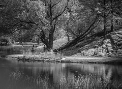 Harlem Meer (Mildred Alpern) Tags: trees lake leaves reflections outdoors spring centralpark boulders passersby