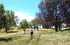 Nature Hike (derNubo) Tags: trees portugal nature landscape europe hiking meadow wanderlust algarve tavira naturehike